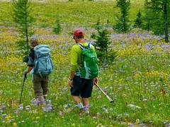 7-097 (Gnarlene) Tags: flower hiking banff healypass monarchramparts