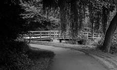 Serenity (MelisaTG) Tags: trees summer nature canon landscape outdoors woods outdoor arnhem urbanwoods flowersplants canon600d