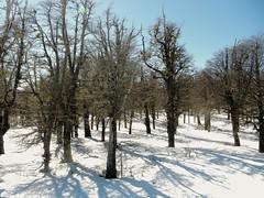 desquesire (teleoalreves) Tags: snow love nature argentina way landscape emotion hiver nieve september enjoy be rest try naute teleoalreves