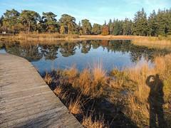 Nationaal Park de Hoge Veluwe (Truus) Tags: park holland de nederland hoge veluwe autuumn herfs