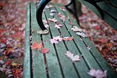 _DSC7626 Autumn Leaves Park Bench (anthonymaw) Tags: autumn vancouver main lifestyle soma eastside westcoast