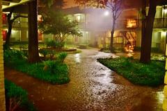 New Fort Worth Annual Rainfall Record 2015 (Cowboy Dan Paasch) Tags: rain fort worth turd floater