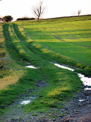 After the rain (mark.griffin52) Tags: autumn england sunlight field track farm buckinghamshire crops puddles cheddington