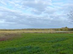 Heugas, Landes: dans les barthes, le long du Braou. (Marie-Hlne Cingal) Tags: france 40 landes sudouest aquitaine heugas martesdenubes