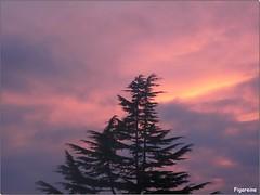 Le ciel de ce soir et le cdre d'un voisin (Figareine- Michelle) Tags: ciel cdre