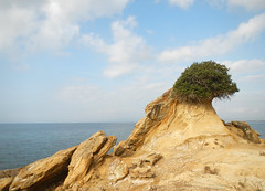 Sandstein, meine Liebe (NEMEON Olivenl) Tags: sea vacation holiday plant meer wasser mediterranean mare urlaub pflanze h2o greece oliveoil griechenland mittelmeer peloponnes     nemeonolivenl