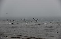 Mare d'inverno (Tabita Biondi) Tags: winter sea nature fog mare peace natura silence pace nebbia inverno lonelyness silenzio solitudine
