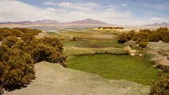 Salar de Tara (Emerson Alecrim) Tags: chile tara atacama salar deserto sanpedrodeatacama salardetara