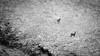 Deer (Andrea Lanzilli) Tags: fujifilm xf 100400mm f4556 r lm ois wr fuji xpro2