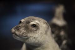 Muséum national d'histoire naturelle (Chris Hooton) Tags: chrishooton chrishootonphotography chrishootonnewzealand