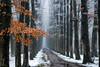 First snow, last leaves (larsvandegoor.com) Tags: