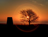 2016_12_27_0158_59_60_fused (EJ Bergin) Tags: westsussex findon cissburyring earlymorning sunrise tree trigpoint silhouette hdr exposurefusion sunring