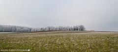 On a cold morning in early December. (andreasheinrich) Tags: landscape fields forests winter december morning cold frozen overcast germany badenwürttemberg neckarsulm dahenfeld deutschland landschaft felder wälder dezember morgen kalt gefroren bewölkt nikond7000