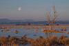 Moonset (Mike sheahan) Tags: wetlands weland snags sunrise sunup moonset