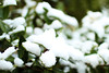 white garden (Katrinitsa) Tags: snow white colors ef35mmf14lusm canon canoneosrebelt3i focus bokeh winter wintercolors nature landscape beauty beautiful athens greece awesome amazing naked snowy ice icy magic magical art artistic fairy tale