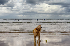 Poser (gianpaolo campiglia) Tags: dog clouds surf rain gijon asturias spain nikon