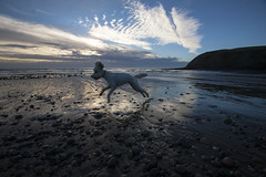 170129 St Bees 03 (John - Nash) Tags: st bees stbees cumbria westcumbria lakedistrict beach sky cloud blue white before sunsrise landscape seascape beachscape sea water waves foam wideangle canon dog labradoodle bouncing excited