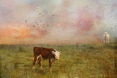 Where it's Spring All Year (Distressed Textures) Tags: new textures watercolor sunny warm cows landscapes moo painterly distressedtextures