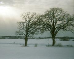 Field of Snow and Trees (Sean Anderson Media) Tags: 110 110film lomographytiger winter snow landscape vivitarpointandshoot filmgrain lofi oaktrees trees sunset filmphotography lightbeams horizon clouds snowylandscape