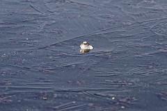 _DSC1753_DxO (Alexandre Dolique) Tags: d810 base de loisirs étampes gelée
