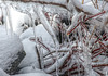 Cold as Ice (Cindy's Here) Tags: ice branches snow rocks mothernature naturesworkofart silverharbourconservationarea shuniah ontario canon 93 117