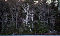 White-Birch-3 (desouto) Tags: nature landscape rivers lakes snow ice sky trees sunrise sunset colors