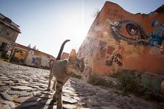 mind's eye (Fabrizio Spagnolo) Tags: 2016 lisbona portogallo cat gatto gatti cats lisbon
