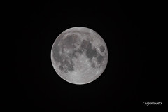 Full moon (Tigermoto) Tags: 6d canon sigma sport 150600mm 600mm handheld hand held