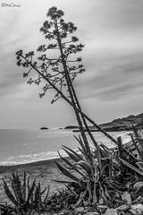 Los Escullos (Cabo de Gata) (bstacruzphotography) Tags: beach sea escullos gata cabo playa paisaje