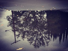 The World Turned Upside Down Reflections can give you an new way to look at the world. Right side up or upside down. #reflection #rain #outdoors #nature #tree #puddle #puddlegram #LA #losangeles #ig_losangeles #wheream_I_LA #insta_losangeles #cali_grammer (dewelch) Tags: ifttt instagram the world turned upside down reflections can give you an new way look right side up or reflection rain outdoors nature tree puddle puddlegram la losangeles iglosangeles whereamila instalosangeles caligrammers lagrammers losangelesgrammers discoverla conquerla unlimitedlosangeles californiacaptures uglagrammers