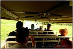 DSC08756PJ_resultat (http://phj.bookfoto.com/) Tags: okavango botswana afrique philippe jubeau