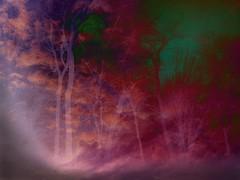 Tree Fantasia (imageClear) Tags: trees fog color fantasia beauty nature aperture nikon picmonkeycom d500 80400mm imageclear flickr photostream graphic