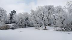 Winter beauty (l-vandervegt) Tags: 2017 nederland netherlands holland niederlande paysbas overijssel deventer winter park parc sneeuw snow white wit landschap landscape