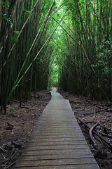 Bamboo Forest Hike (russ david) Tags: bamboo forest hike pipiwai trail maui september 2016 hawaii hi haleakalā national park ハワイ 風景