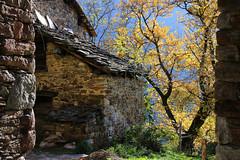 Val d'Aosta - Valle di Gressoney: Perloz, Chemp: le luci di novembre (mariagraziaschiapparelli) Tags: valdaosta valledigressoney camminata montagna mountain allegrisinasceosidiventa autunno chemp perloz monterosa villaggio frazione