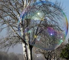Bubble 3 (ettì) Tags: bolle sapone bubble cascine firenze albero trasparenza riflessi colori