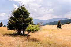 Uplands Meadows (alèx-andros) Tags: la pass meadows alto trentino altura bassa uplands adige valico lagorai panarotta praterie