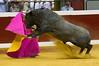 DSC_9615.jpg (josi unanue) Tags: animal blood spain bull arena bullfighter sansebastian esp toro traje asta sangre espada bullring unanue guipuzcoa matador torero tauromaquia sufrimiento cuerno ureña banderilla banderilero