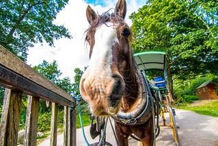 Jaunty Horse