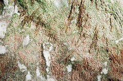 Motionless (Laura-Lynn Petrick) Tags: ocean california usa sun abstract nature water sunshine cali sparkles rocks pacific earth sunny pacificocean series geology motherearth earthly californialandscape geologic swimmingintheocean californiadreaming californiatour earhtly lauralynnpetrickabstract lauralynnpetrick35mm lauralynnpetrickcalifornia lauralynnpetrickstinsonbeach lauralynnpetrickpacificocean lauralynnpetrickoceania lauralynnpetricksecretcove lauralynnpetricktextures lauralynnpetrickpacific lauralynnpetrickgeology lauralynnpetrickstinson