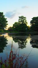 20150912_192722 Dusk Reflections (Mel_is_Moving) Tags: park uk trees sunset sky plants lake water pen reflections pond bradford yorkshire harold olympus epl6