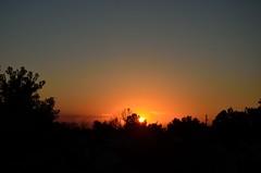 DSC_2320 (bfaling) Tags: trees columbus ohio red summer orange sun yard sunrise back glow neighborhood oh 2015