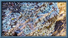 Turquoise Lichen (Sugardxn) Tags: blue arizona southwest rock photoshop canon moss turquoise az fungus frame lichen algae saltriver hwy60 picswithframes canoneos7d canon7d sugardxn garypentin