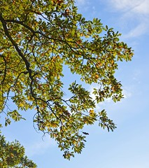 Quercia (giorgiorodano46) Tags: quercia monticimini montefogliano novembre2015