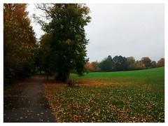 Aireville Park 3 (tubblesnap) Tags: park autumn fall wet leaves walking path falling skipton aireville