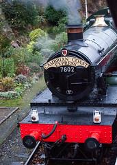 _D3A2425.jpg (Bob Green 52) Tags: svr severnvalleyrailway bradleymanor 7802 manor manor50 bewdley engine loco steam smoke rails steamengine train