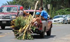 bamboo transport - Kamehameha Hwy - Oahu (Jac Hardyy) Tags: auto road street boy boys leaves car cane kids truck fun hawaii leaf highway oahu kamehameha transport pickup kinder bamboo hwy transporter junge jungen bambus spas strase bambusrohre bambusstangen