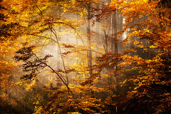 Defferent kinds of the Light (Ms. June Franks) Tags: autumn trees sunset mountains nature pinetree sunrise landscape woods path seasonal poland sunny multicolor    autumnlandscapewoodsmulticolorseasonalnaturesunnym