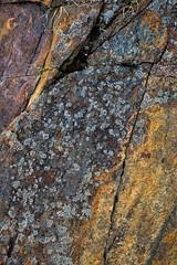 Tennessee Rock Lichen