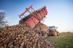 IMG_9849 (Bad-Duck) Tags: vinter traktor mat hst ker stuka newholland maskiner kvll skrd flt jordbruk grda lantbruk rstid livsmedel sockerbetor fltarbete livsmedelsproduktion omstndigheter